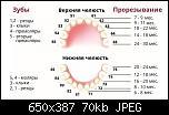 Нажмите на изображение для увеличения Название: прорезывание.jpg Просмотров: 8 Размер: 70.2 Кб ID: 17399